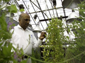 soybean research