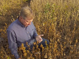 soybean research proposals