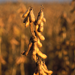 2014 PA Soybean Yield Contest Winners _WEB